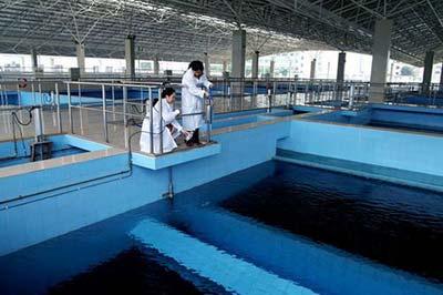 生物活性炭被用于水净化
