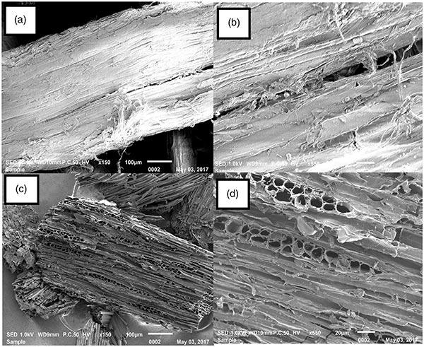 原材料与活性炭的SEM图像
