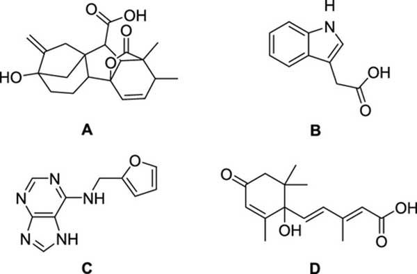 植物生长促进剂的结构